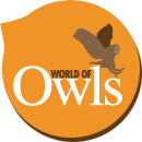 World Of Owls