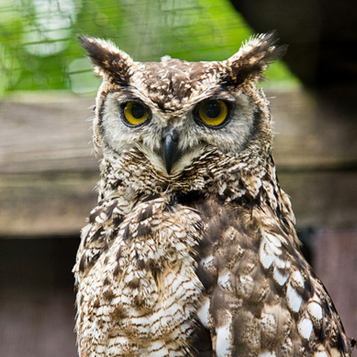 Image of: Tawny Owl Get Social Facebook Twitter 123rfcom World Of Owls What Are Owls
